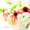 庭の花(庭に咲いている花です)