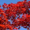 紅葉と青空と