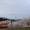 桜の中の紅花列車