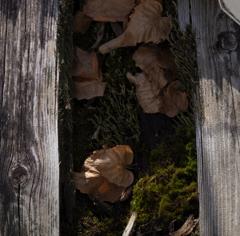 枯葉の居場所