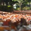 秋のジュータン