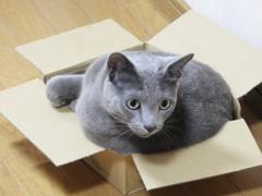 この箱が好きニャン(=^ェ^=)♪