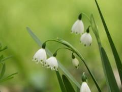 かわいい 白いお花