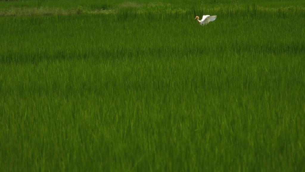田園風景の中に・・・♪