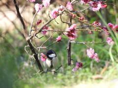 春が来たよ~♪