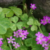紫片喰-天王寺公園