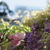 八重桜と藤と宝塔