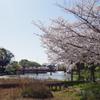 染井吉野-天王寺公園