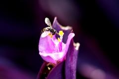 紫御殿に花虻