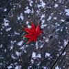 モミジと初雪。