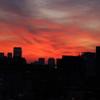 真っ赤の夕日なのさ