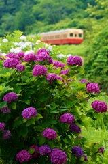 小湊鉄道の初夏!