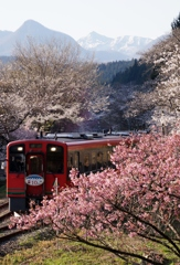 山里の春①!