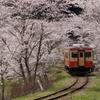 満開の桜に吸い込まれるキハ20(いすみ型)