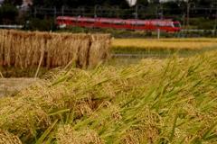 小田急沿線にも実りと収穫の秋が・・・