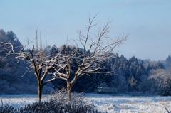 凍てつく朝❕②