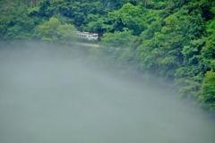 新緑と川霧が立ち込める中を進むキハ40!
