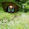 トンネルを抜けたら白い花に迎えられました‼