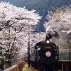 大井川鉄道の桜トンネル!