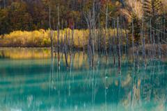 青い池with紅葉?