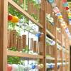 氷川神社風鈴祭り