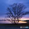 冬の朝 湖畔に一輪