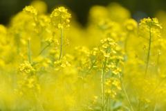 黄色い世界❤