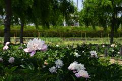 200524長居植物園43