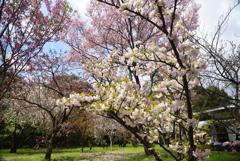 200402a京都植物園17