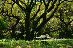 190917京都植物園39