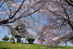 210331a山田池公園09