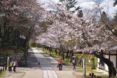 200329a奈良公園39