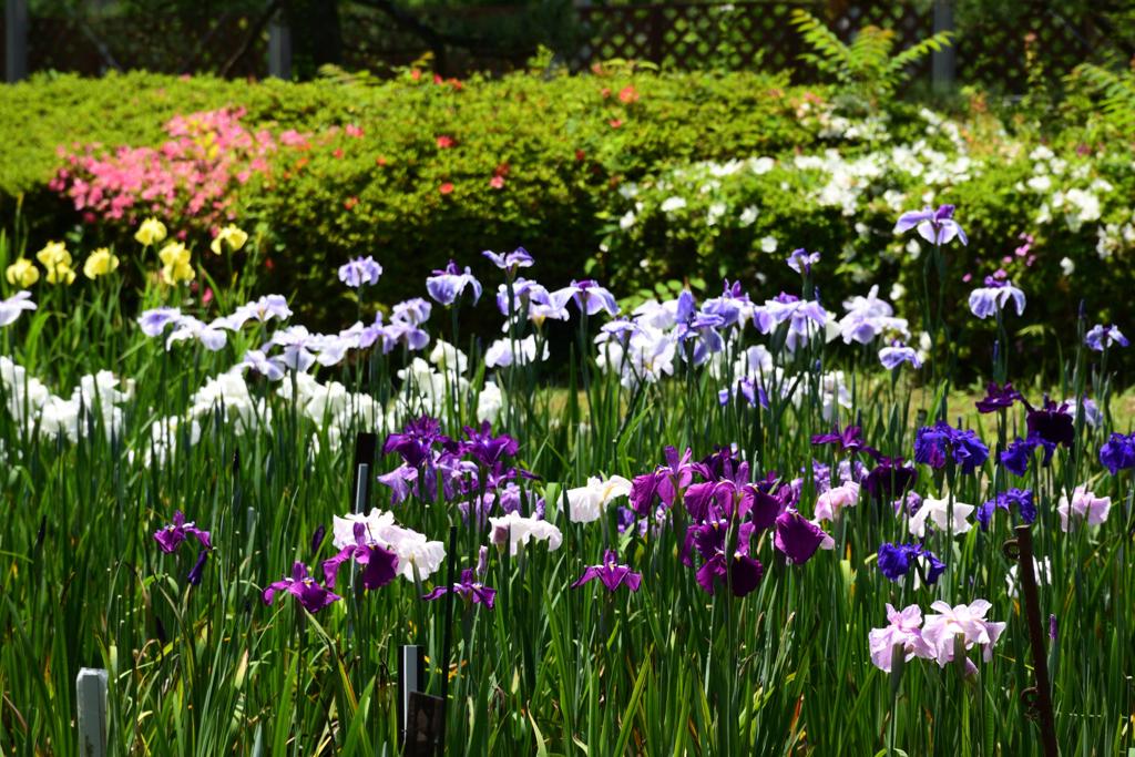 210601京都植物園16