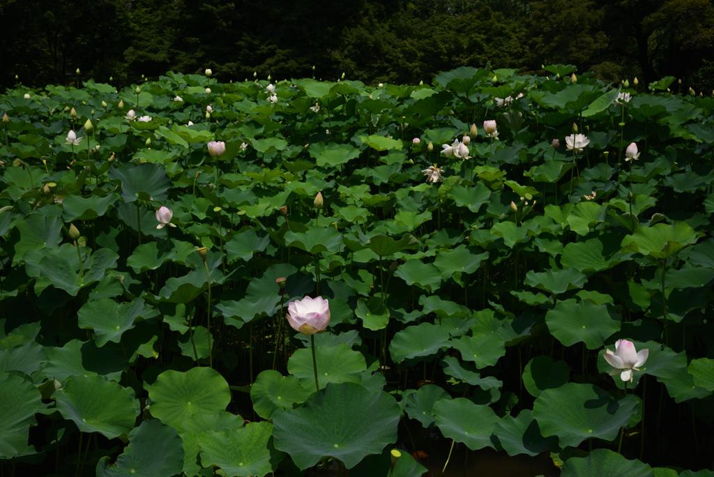 200712京都植物園27