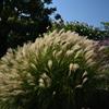 201031京都植物園27