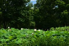 200702鶴見緑地04