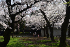 210329c平野神社05
