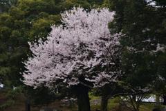 200329a奈良公園48