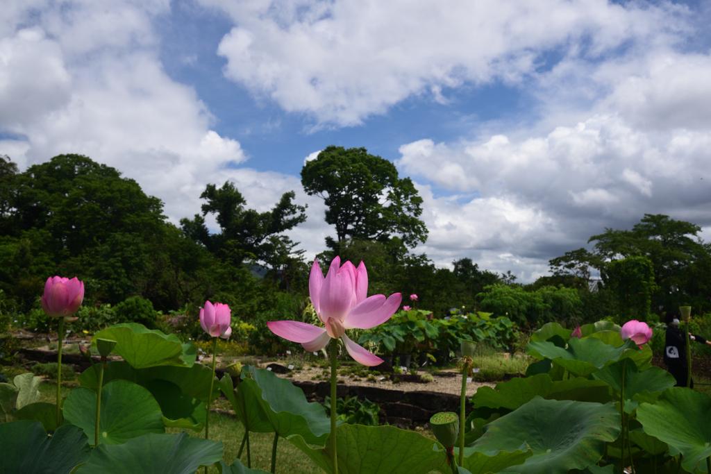 200712京都植物園38