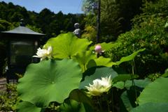 200629長弓寺11