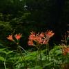 210811京都植物園08