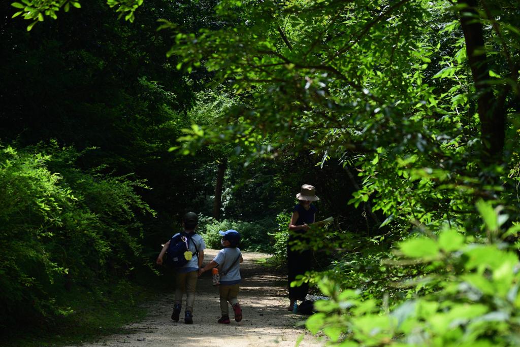 200805京都植物園25