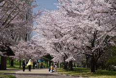 210331a山田池公園35