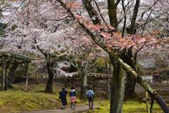 200329a奈良公園25