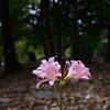 210811京都植物園19