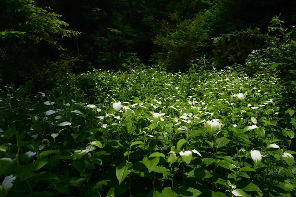 210624京都植物園53