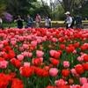 180402b植物園18