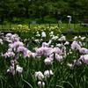 210529a白鷺公園14