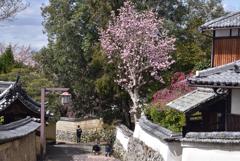 200329a奈良公園34