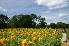 190812万博公園20